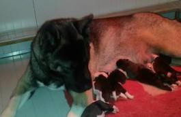 Nami e i cuccioli